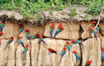 amazon-tour-zona-cultural-colpa-de-loros
