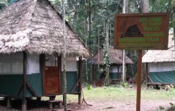 campamento-otorongo-zona-reservada-manu