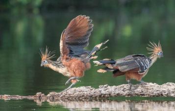 cocha-salvador-aves-zona-reservada