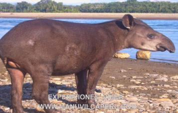 manu-zona-reservada-5d-collpa-de-guacamayo