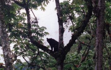 osos-de-anteojos-ornitologia-10d