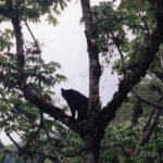 osos-de-anteojos-zona-reservada