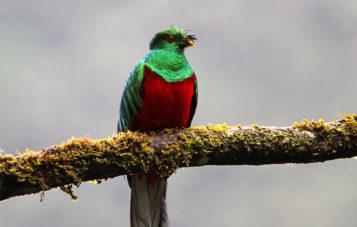 quetzal-zona-reservada-manu