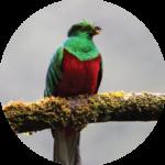 tours-avistamiento-de-aves-expediciones-vilca