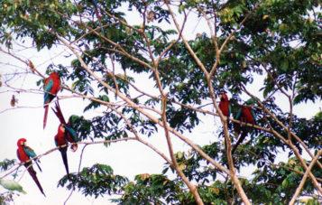 amazon-tour-zona-cultural-colpa-de-guacamayos-arboles
