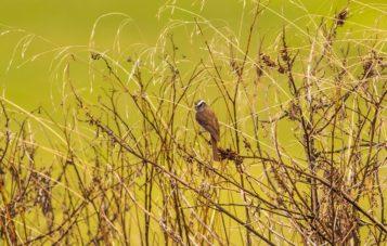 marcapata-ornitologia