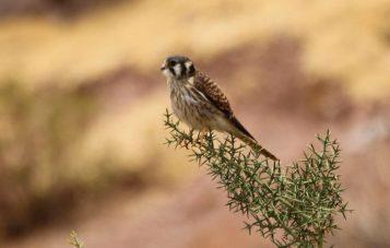ornitologia-laguna-huacarpay