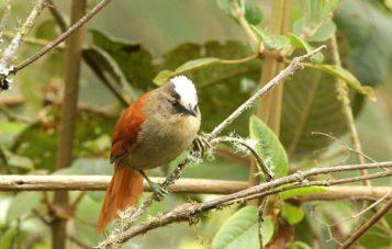 ornitologia-marcapata